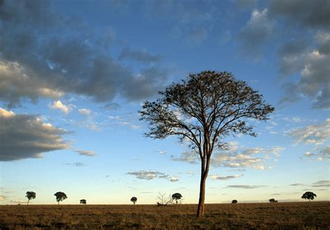 Nature in steep decline due to human activities: WWF