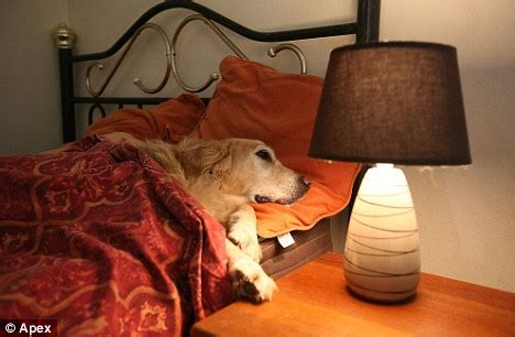 It's a dog's life! The luxury dog hotel equipped with its